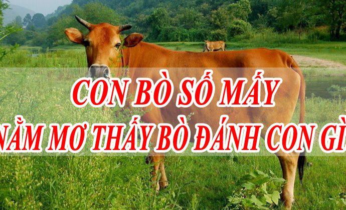 Mơ thấy con bò