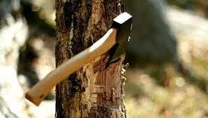 Mơ thấy chặt cây
