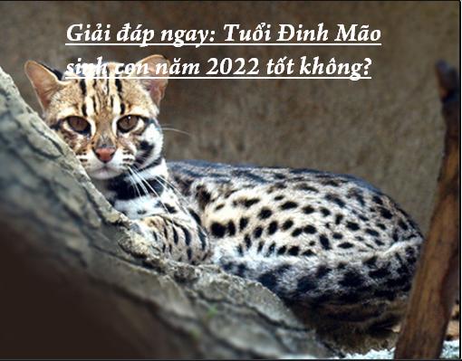 Giải đáp ngay: Tuổi Đinh Mão sinh con năm 2022 tốt không?